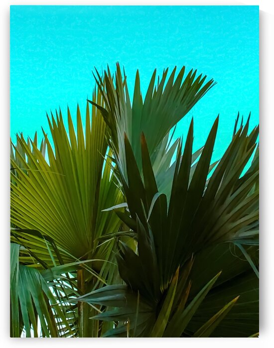Closeup green palm leaves texture with blue background by TimmyLA