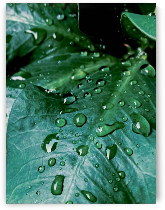 Closeup green leaves plant texture with drop of water by TimmyLA