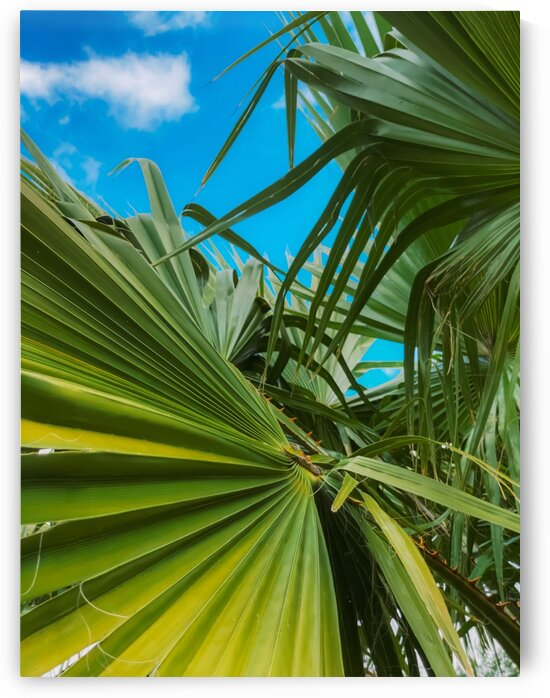 green palm leaves abstract with blue sky background by TimmyLA