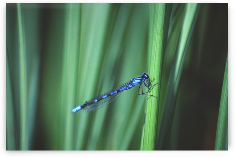 bluet by David J Tilley
