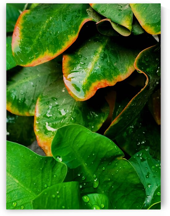 Closeup green tropical leaves plant texture background by TimmyLA