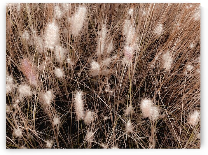 blooming grass flowers with brown dry grass background by TimmyLA
