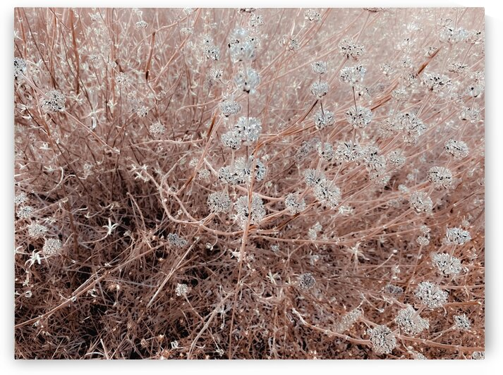 blooming dry flowers with brown dry grass field abstract background by TimmyLA