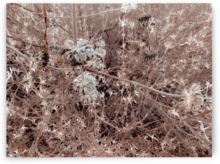 blooming dry flowers with brown dry grass texture abstract by TimmyLA