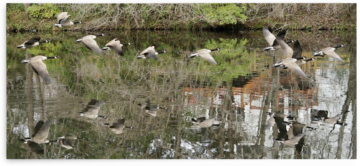 Ducks Over Pond by Scott Deyo