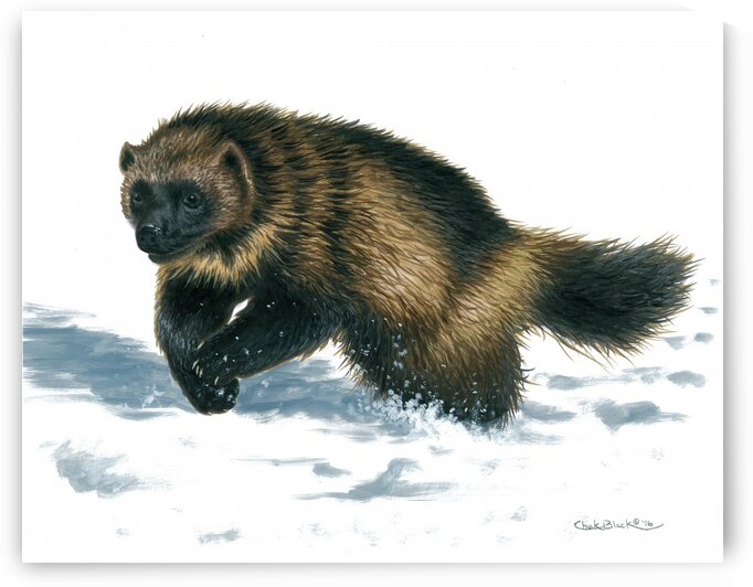 wolverine canvas by CRB