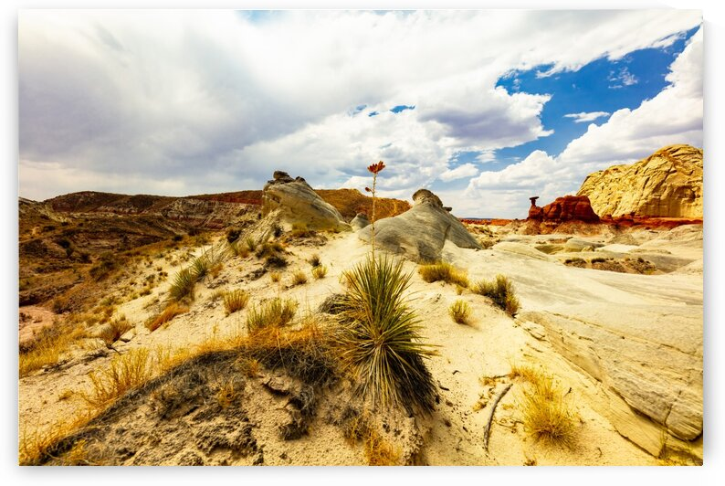 Desert Flower by Rick Welsh K59 Photography