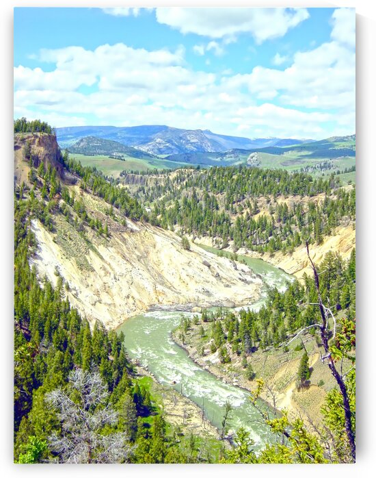 Wild Yellowstone by 360 Studios