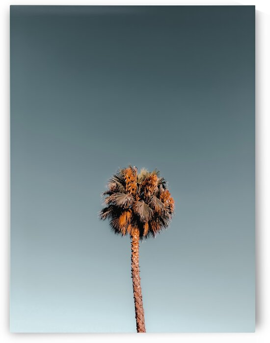 Isolated tropical palm tree in summer with blue sky by TimmyLA