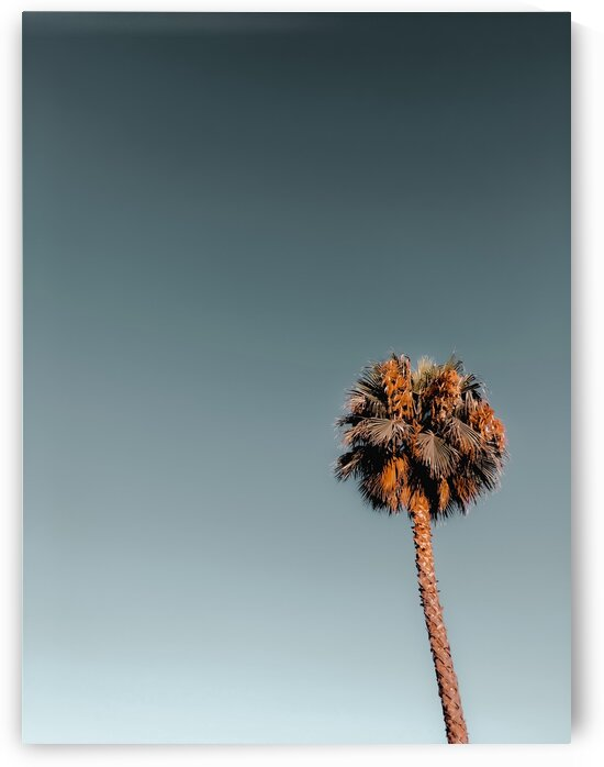 Isolated palm tree in summer with blue sky by TimmyLA