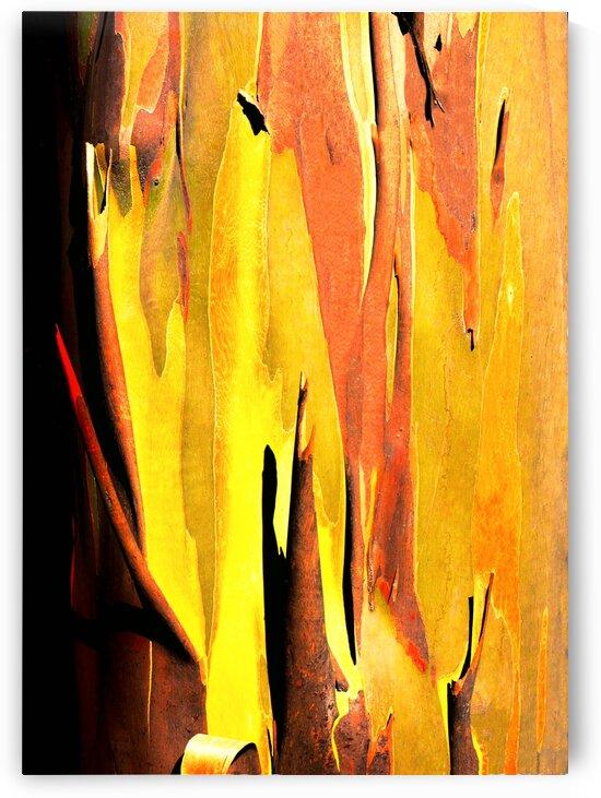 Snow Gum Tree Bark - Tasmania by Lexa Harpell