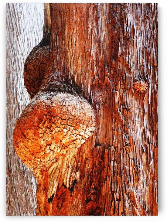 Aussie Alpine Tree Bark 2 by Lexa Harpell