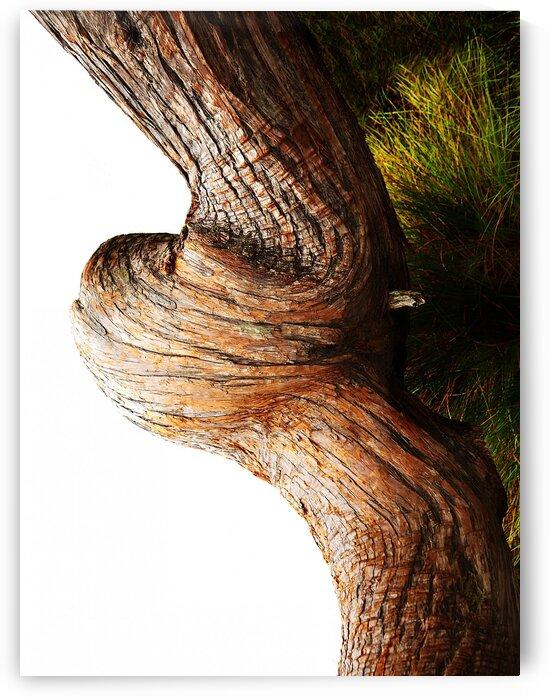 Aussie Alpine Tree Bark 3 by Lexa Harpell