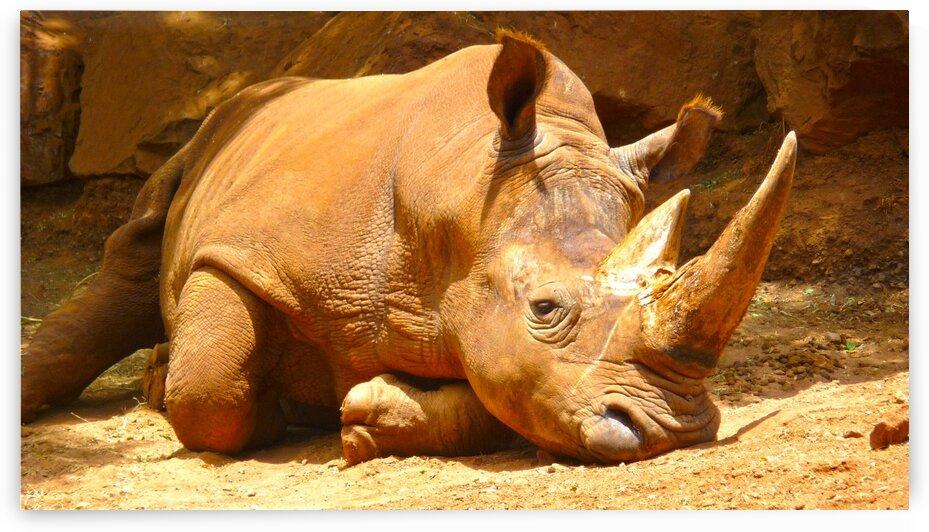 Rhino Wild Africa by 360 Studios