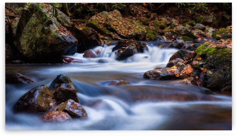 Virginia Creeper Trail Creek by Mark Daniels
