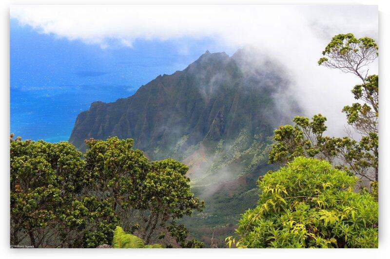 Wild Kauai 3 by 360 Studios