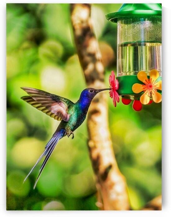 Sao Paolo hamming bird by Andrew Wasik