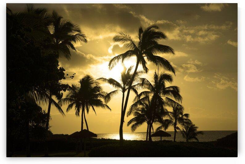 Paradise Dreams by 360 Studios