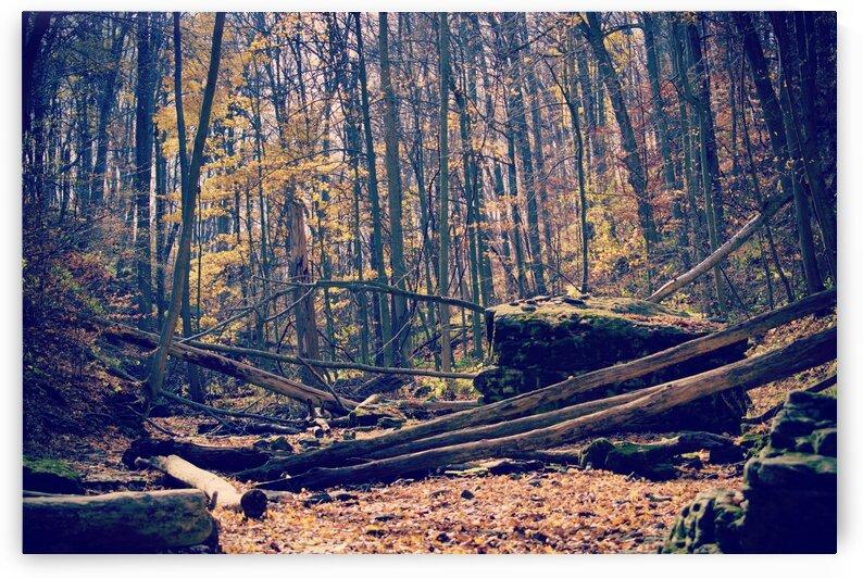 Waterless Fall by Sammi Davis
