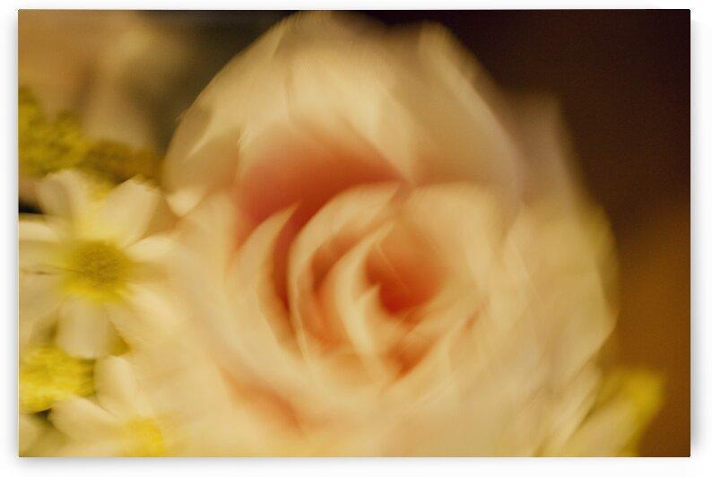 Dizzy Bouquet  by Sammi Davis