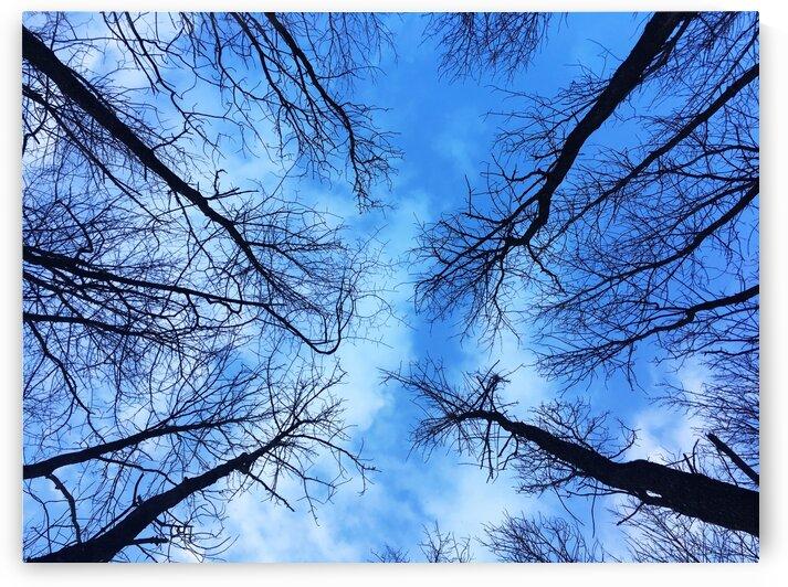 14_Trees In Blue Sky - Arbres Et Ciel Bleu_1980_SQUARE by Emmanuel Behier-Migeon