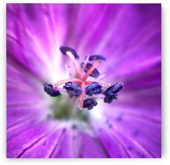 10_Purple Flower Heart - Coeur De Fleur Pourpre_6714_SQUARE by Emmanuel Behier-Migeon