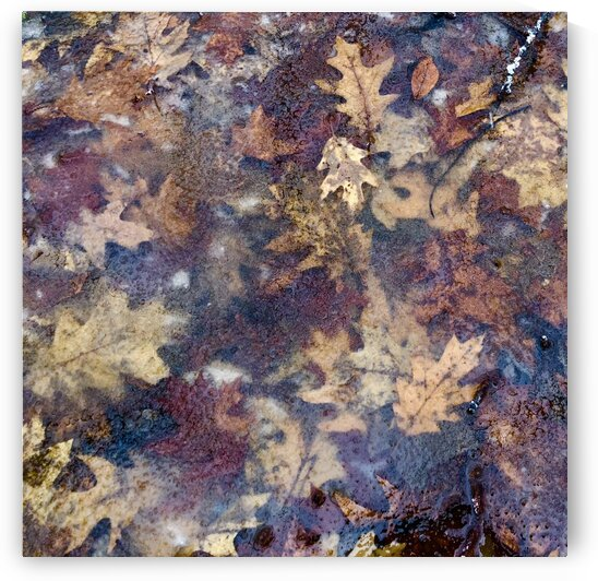 12_Frosted Multicolor Leaves - Givre Et Multicolore_0323_SQUARE by Emmanuel Behier-Migeon