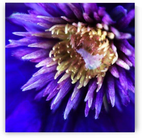03_Purple Sun - Soleil Pourpre_7295_SQUARE_1 by Emmanuel Behier-Migeon