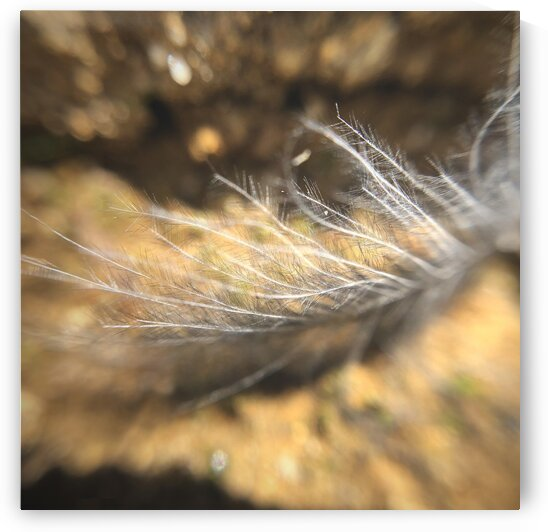 17_Lost Feather - Plume Perdue_8045_SQUARE by Emmanuel Behier-Migeon