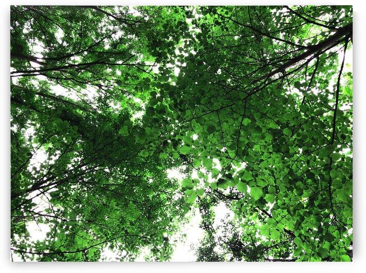 15_Green Vegetal Vault - Voute Vegetale Verte_7461_1 by Emmanuel Behier-Migeon
