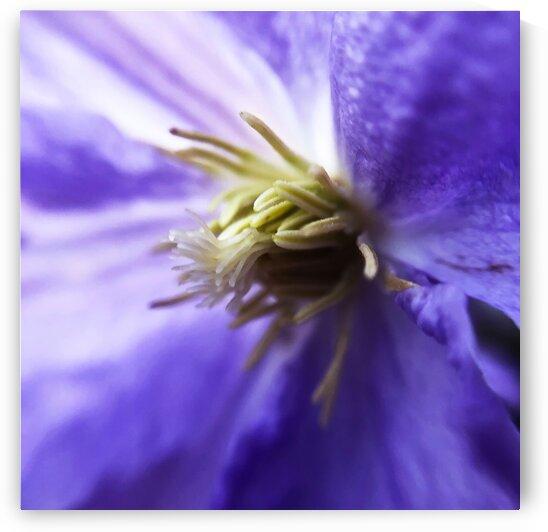 05_Purple Flower Heart - Coeur De Fleur Pourpre_7283_SQUARE by Emmanuel Behier-Migeon
