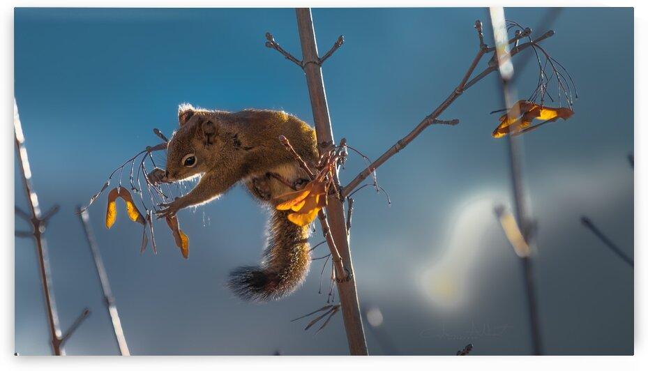 Squirrel by Glenn Albert