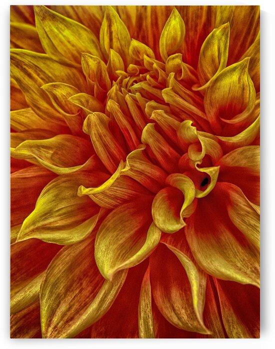 pumpkin yellow by Eugene Rosenthal