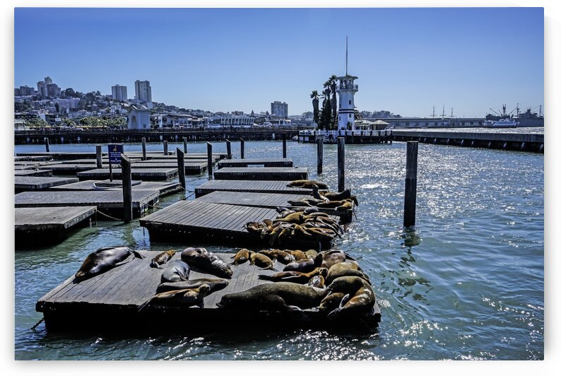 The Wharf @ San Francisco by 24