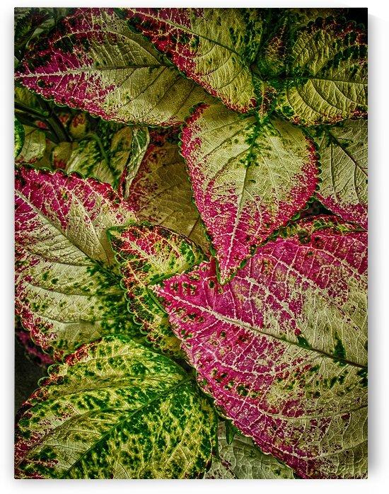color leaves 2 by Eugene Rosenthal