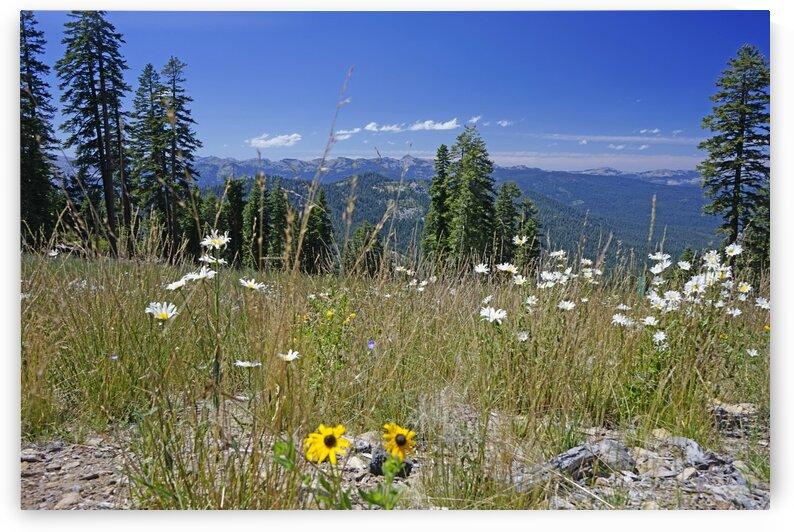Sierra Nevada in Spring 5 of 8 by 24