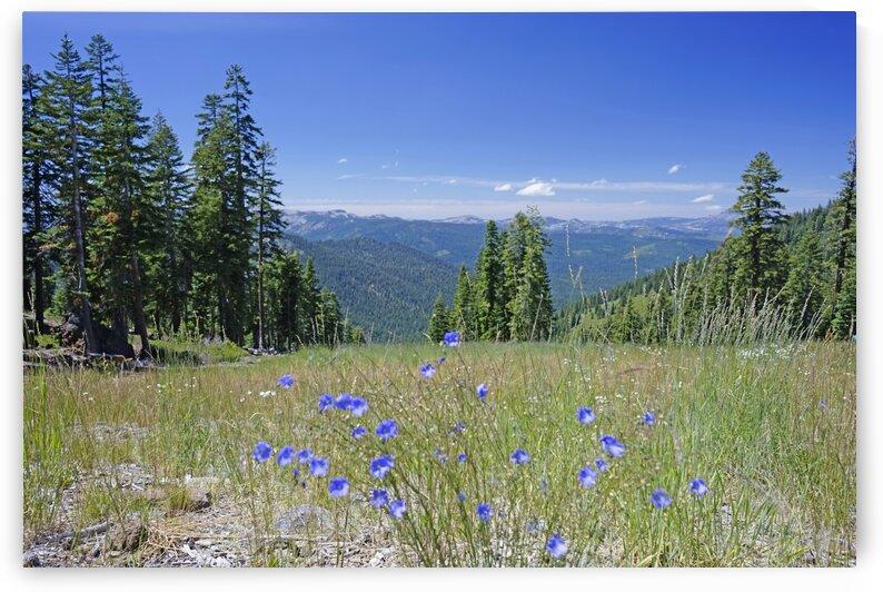 Sierra Nevada in Spring 7 of 8 by 24