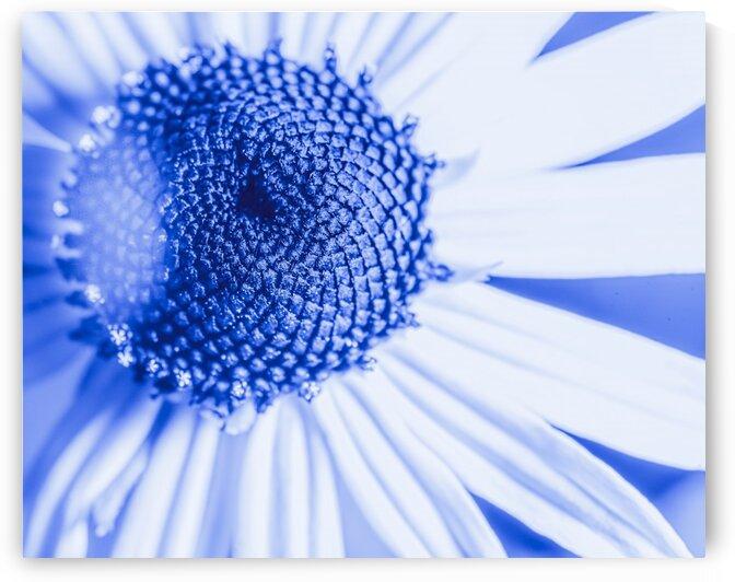 Blue Haze by David M Kors