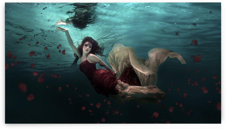 Ocean of Roses by 1x