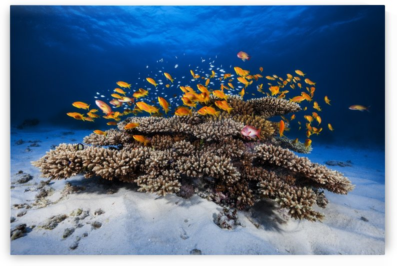Marine Life by 1x
