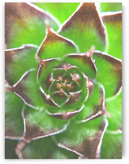 20_Green Succulent Perennial - Verte Vivace_9780_CLEAR by Emmanuel Behier-Migeon