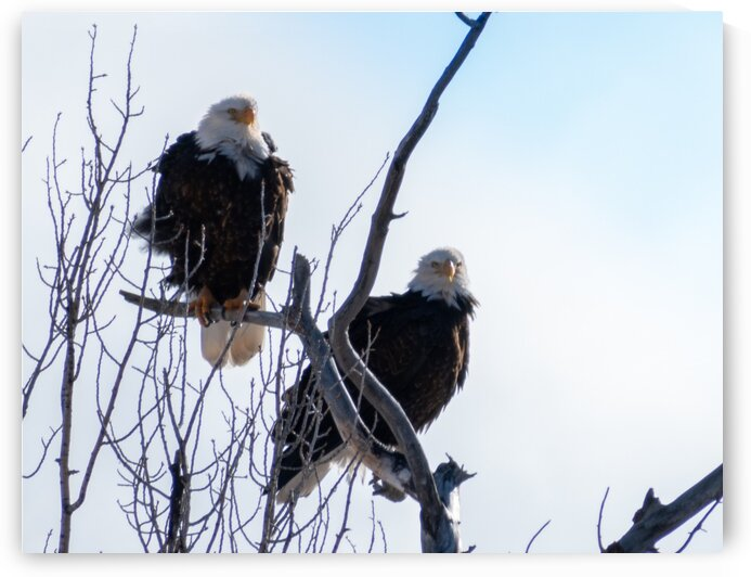 Two Eagles by Dave Massender