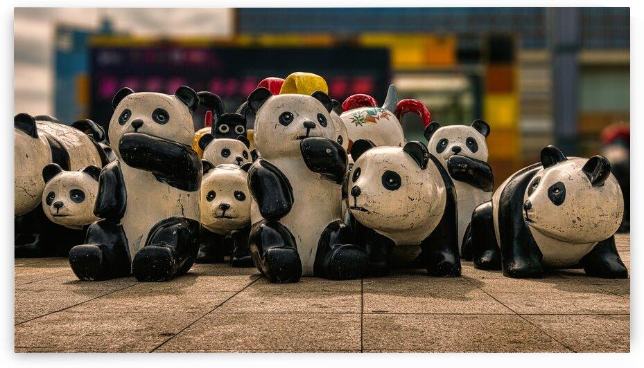 Wooden Pandas On The Streets Of Shenzhen China 15 | 11-2018 by Vlad Meytin