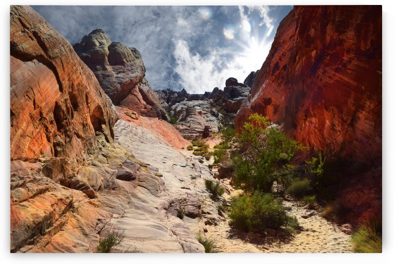 White Dome Trail Valley Of Fire by Frank Wilson