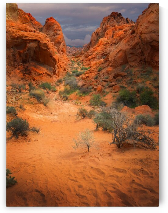 Rainbow Vista Trail Valley Of Fire by Frank Wilson