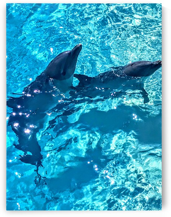 Dolphins out for a swim  by Seanesty