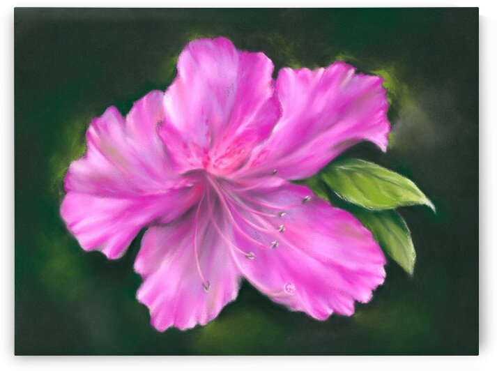 Vivid Pink Azalea with Green Foliage by MM Anderson