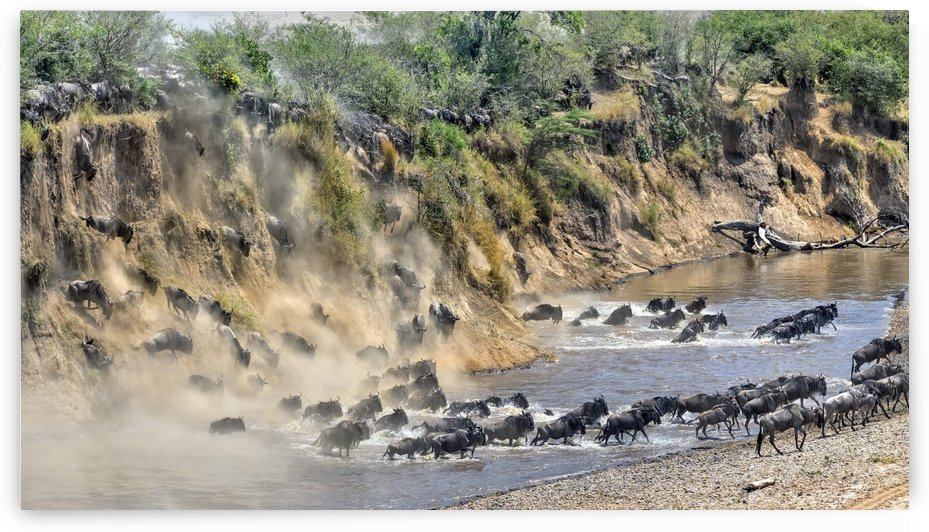 Great Migration by 1x
