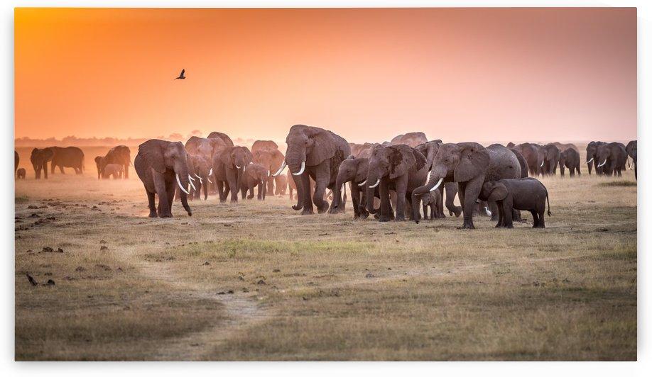 Amboseli Morning Stroll to Starbucks by 1x