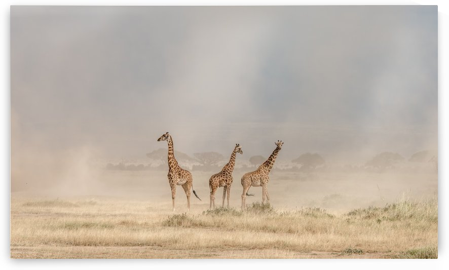 Weathering the Amboseli Dust Devils by 1x